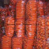 Fresh Sweet Carrot with New Crop Season
