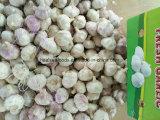 Pure White Garlic 6.0cm+ From Chinese Garlic Factory