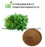 Coriander Herb P. E, Coriander Herb Extract Powder for Foods Supplement