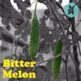 Bitter Melon Extract / Momordica Charantia Extract / Charantin
