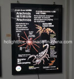 Wall Mounted Aluminum Magnetic Frames for Posters on Pillar