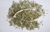 White Tea Extract for Food Supplements and Drinks