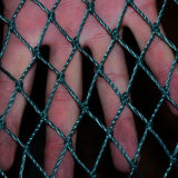 First Grade HDPE Anti Bird Netting China Wholesale