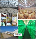 Prefabricated Poultry House for Cage and Floor Breeding