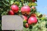 Amino Acid Fertilizer for Apple Fruit