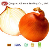2017 Chinese Fresh Big Yellow Onion