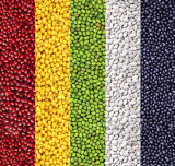 High Quality Dried Bean (red/yellow/green/white/black) in China