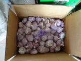 Purple Garlic New Corp Chinese Garlic Low Price