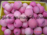 Chinese Fresh Red FUJI/Huaniu/Gala/Golden/Qinguan/Jiguan Apple