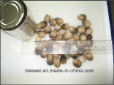 High Quality Mushroom Straw Mushroom From China