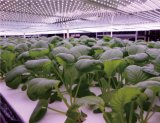 Patented LED Grow Light Module for Plant Factory
