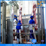 Cattle Slaughterhouse Processing Line