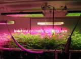 600W High Power LED Grow Lighting