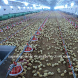 Automatic Poultry Equipment for Broiler Farm