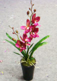 Potted Orchids Flowers (J-003)