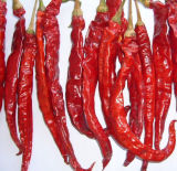 Natural New Crop Red Chaotian Chili (GLY-071802)