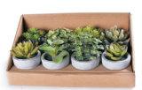 Artificial Bonsai, Artificial Cactus