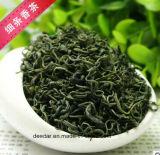 New Season Green Tea