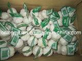 2015 New Crop Small Mesh Bag Packing Garlic