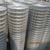Galvanized Welded Wire Mesh for Building Used