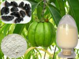 Weight Loss Supplement 50%~60% Hca Garcinia Cambogia Extract