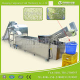 Salad Cabbage Washing and Dicing Production Line