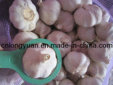 New Crop Fresh Garlic (4.5cm, 5.0cm, 5.5cm, 6.0cm)