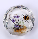 Insect Amber Crafts-Paperweight