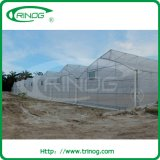 Multi Span Fixed Vent Rose Greenhouse for Sale