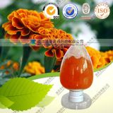 Marigold Flower Extract Powder Cws Lutein for Eyes