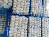 Chinese Normal White Garlic 200g/4kg Mesh Bag