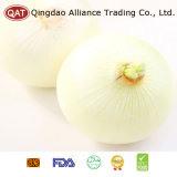 Best Price Peeled White Onion with High Quality
