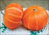 High Quality Pumpkin Fine Powder with Best Price
