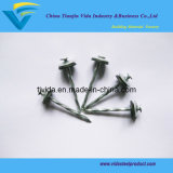Twisted Shank Roofing Nails with Lowest Prices and Excellent Quality