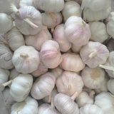 Wholesale Price for Chinese Fresh White Garlic