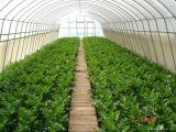 Arch Greenhouse for Vegetable Growing
