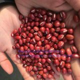 New Crop Food Grade Adzuki Bean PP Bag