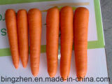 Hot Sale! China Wholesales Fresh Vegetables Carrot