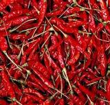 Chaotian Chili