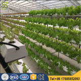 Commercial Greenhouse Vertical Hydroponic Grow Systems Forplant Growth