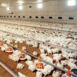 Strumentazione automatica del pollame di alta qualità dell'insieme completo per la griglia