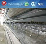 Gabbia per 15, riga dell'alimentazione dei 000 uccelli (A-4L120) dell'uovo del pollo della maglia del nastro metallico