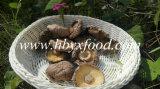 Высушенное ровное сбывание грибов Shiitake с едой низкой цены здоровой