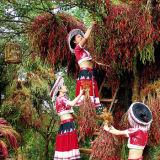 Peperoncini rossi secchi del Yunnan Aborl