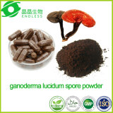 Private Label biologische certificering Ganoderma Lucidum Spore Powder Capsule