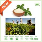 Poeder van het Uittreksel Stevia van 100% het Natuurlijke