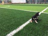 el balompié de 50m m/calidad de Futsal la buena se divierte la hierba/el césped