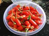 Chino Wolfberry de las bayas de Goji del níspero