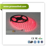 LED Controller를 가진 자동 LED 5050 SMD White Cool 12V RGB Strip