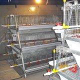 Automatique un type poussin de batterie de poulette met en cage le matériel d'aviculture de poulet à rôtir
